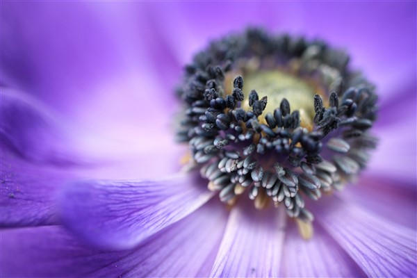 event wellbeing-mindfullness